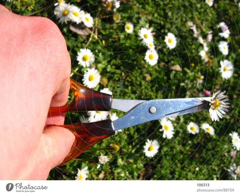 Nature Hand Meadow Spring Environment Action Might Living thing Daisy Tool Divide Biology Reaction Cut Scissors