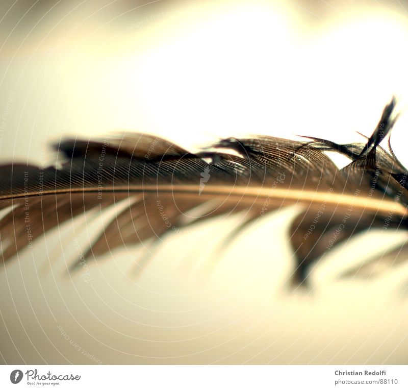 feather Yellow Bird Brown Feather Broken Hover Ease Furrow Delicate Disk