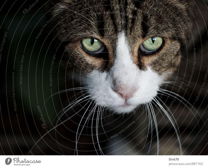 Cat Green White Animal Black Eyes Gray Garden Brown Wild Power Bushes Threat Observe Cool (slang) Pelt