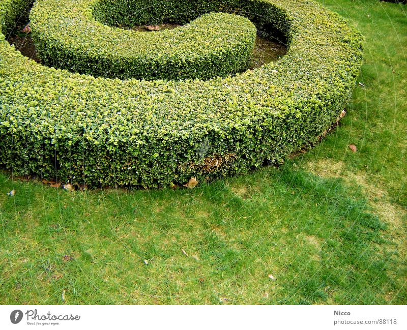 Green Plant Leaf Meadow Grass Spring Garden Earth Growth Bushes Floor covering Grass surface Share Grassland Hedge Maze