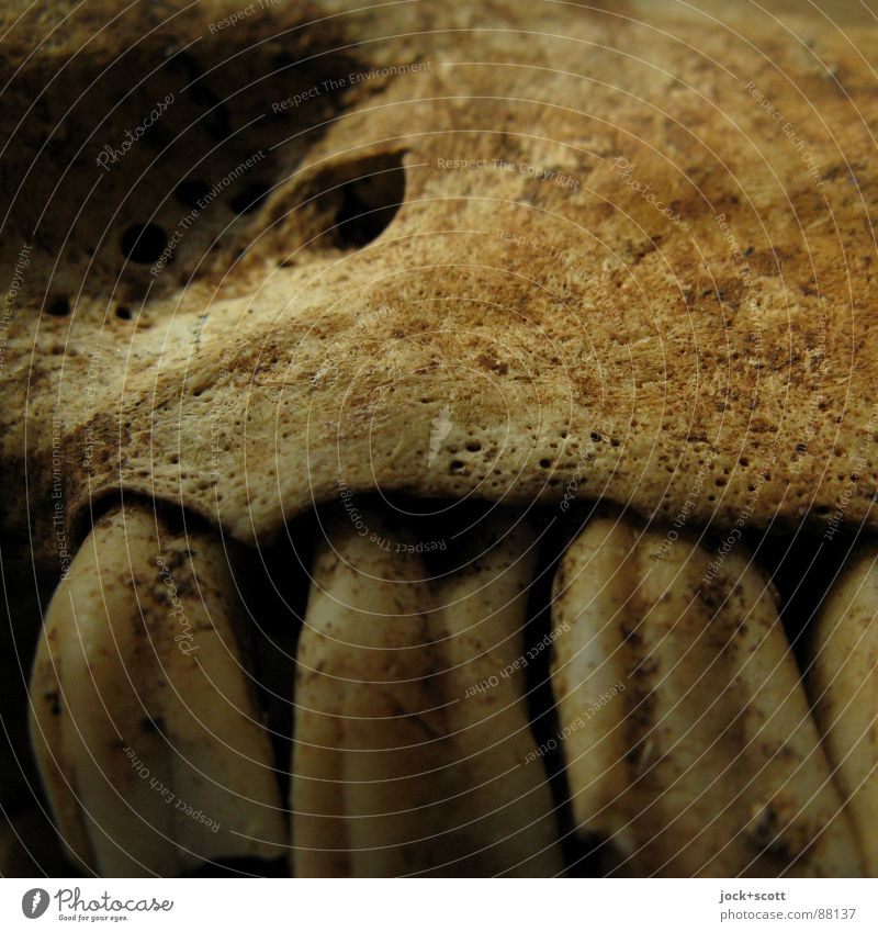 Old Blue Animal Death Authentic Threat Future Transience End Set of teeth Creepy Row Furrow Hideous Column Skeleton