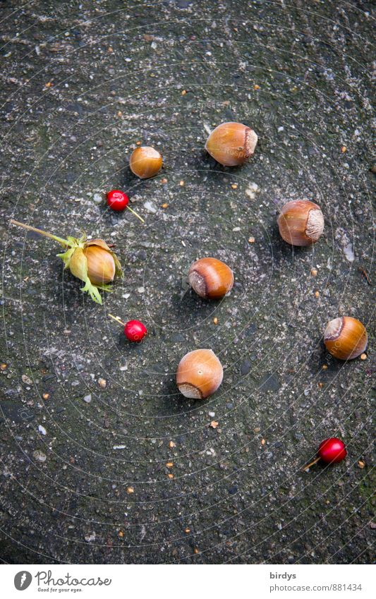 late summer finds Nut Hazelnut kernel Summer Autumn Esthetic Original Positive Beautiful Brown Red Berries Rawanberry Colour photo Exterior shot Deserted