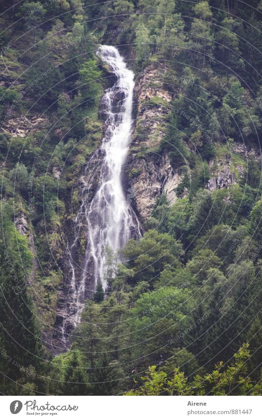 in free fall Nature Landscape Elements Water Forest Rock Alps Mountain Hohen Tauern NP Canyon Waterfall Steep face Mountain forest Threat Gigantic Gray Green
