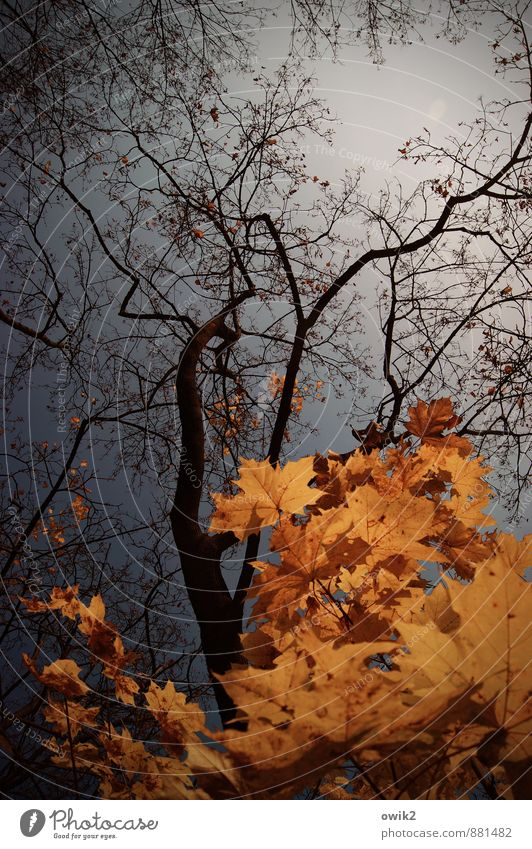 Nature Plant Blue Tree Leaf Calm Black Environment Sadness Natural Orange Idyll Authentic Transience Beautiful weather Change