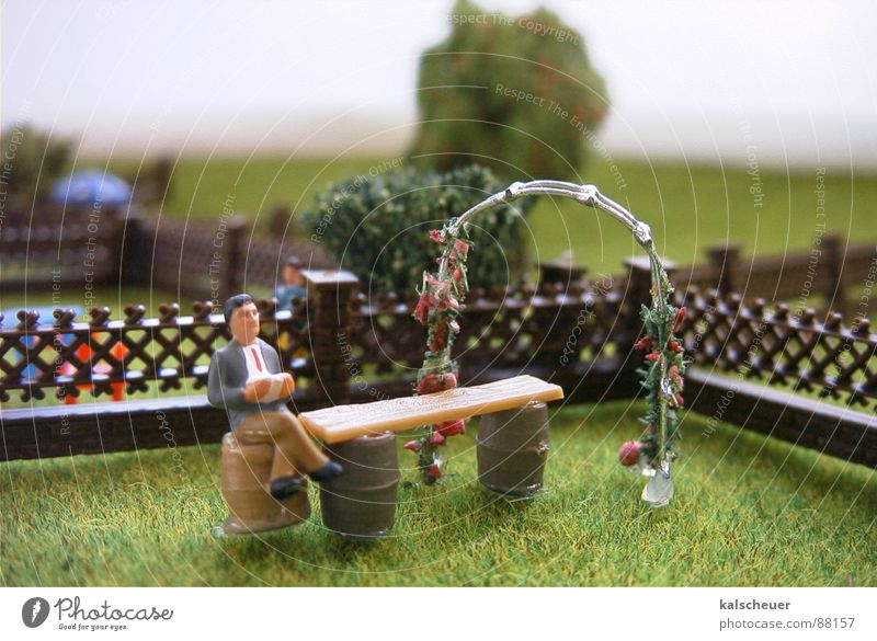 Calm Loneliness Grass Garden Masculine Reading Lawn Leisure and hobbies Fence Placed Garden fence
