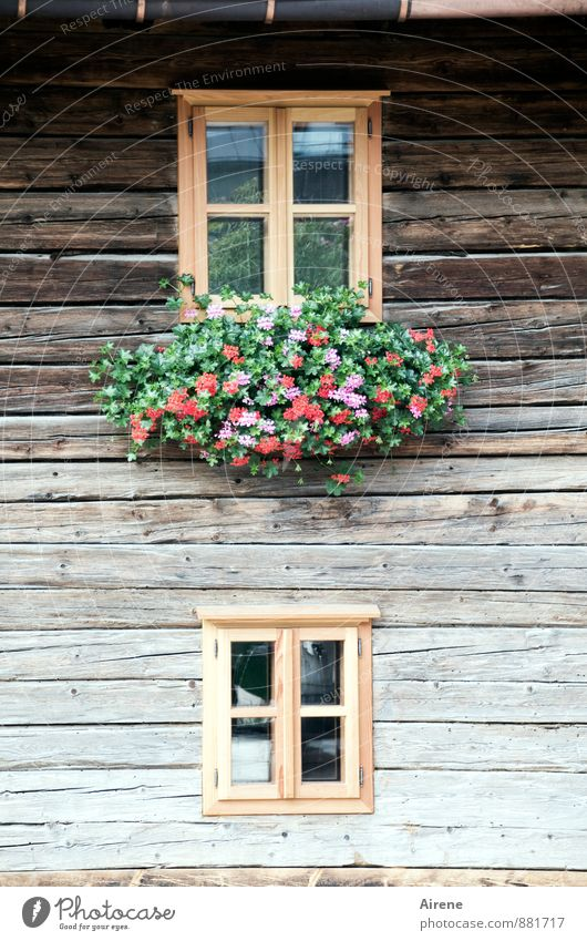 Beautiful Green Red Flower Calm House (Residential Structure) Window Wood Happy Brown Facade Decoration Authentic Joie de vivre (Vitality) Kitsch Village