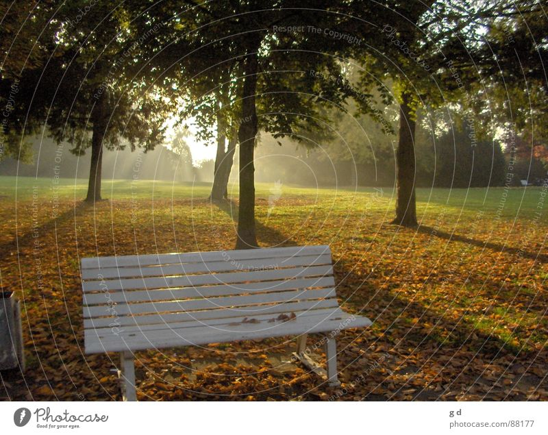 Autumn Germany Bench Dusk Shadow play Early fall Castle grounds