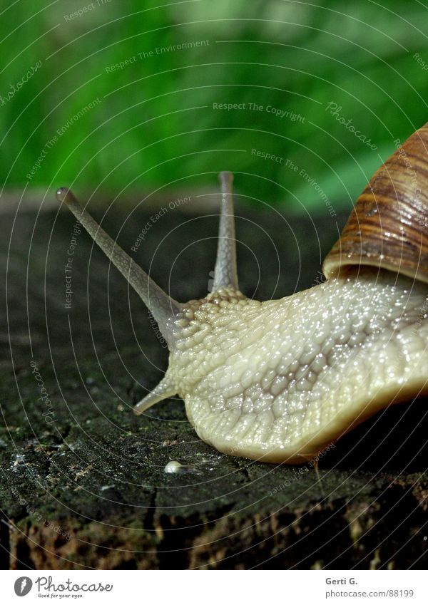 Green Animal Emotions Wood Brown Food Skin Rotate Snail Smoothness Crawl Feeler Sense of touch Hybrid Snail shell Mucus