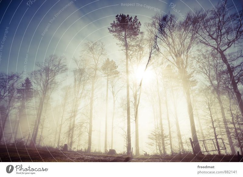 Nature Tree Landscape Winter Forest Environment Cold Autumn Natural Exceptional Bright Weather Idyll Fog Gloomy Threat