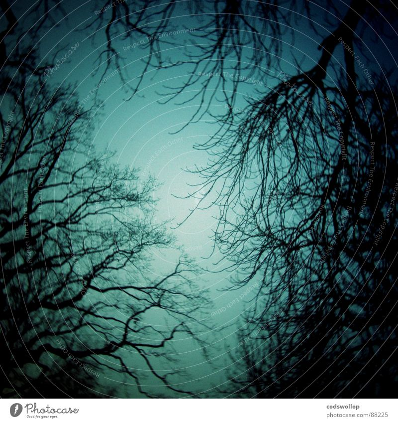 Tree Forest Dark Fear Walking Dangerous Branch Creepy Doomed Panic Witch Jinxed Alarming Wood flour Midnight