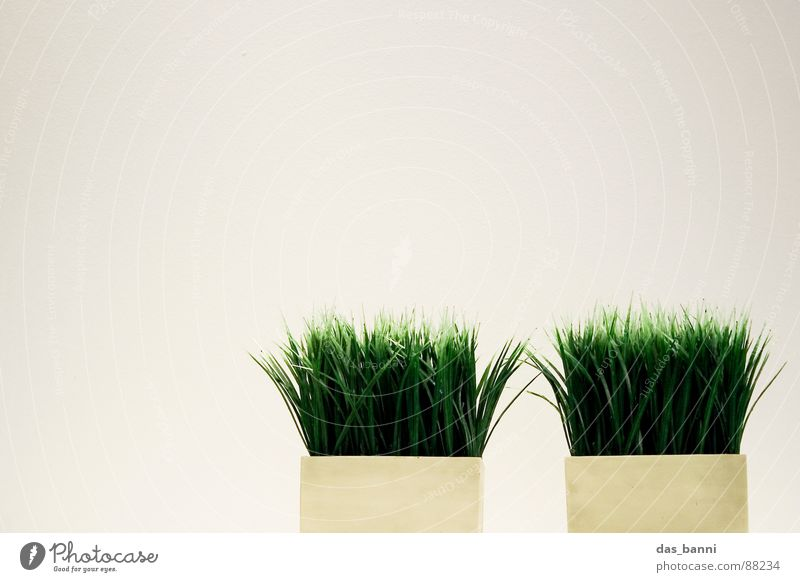gras² - space is luxury! Grass Blade of grass Isolated Image Bright background Copy Space top Tuft of grass Copy Space left Flowerpot Minimalistic