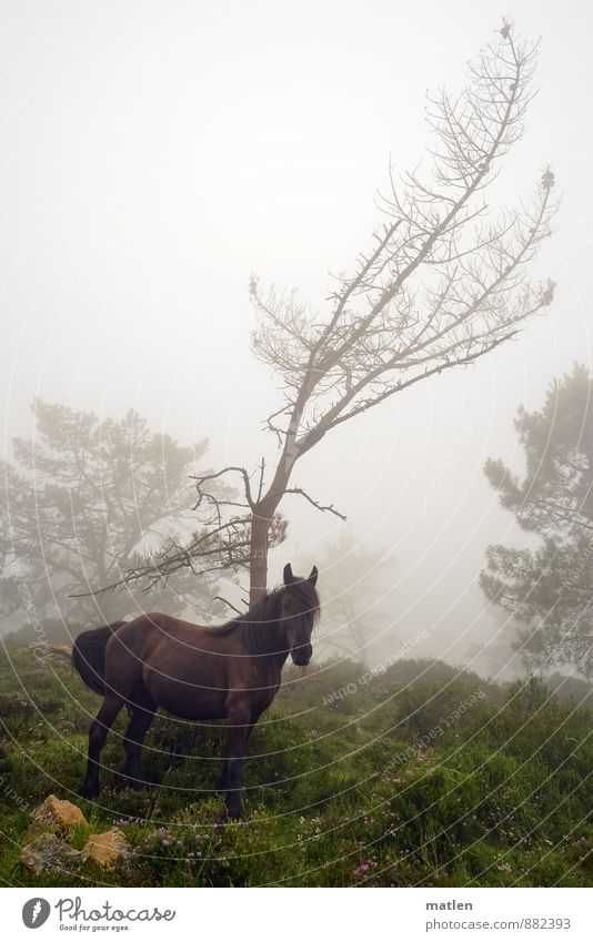 Nature Plant Green Summer Tree Landscape Animal Grass Gray Brown Rock Weather Fog Bushes Stand Horse