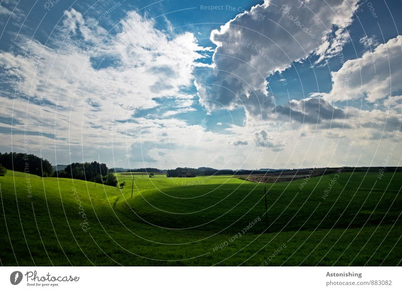 Sky Nature Blue Plant Green White Summer Sun Tree Landscape Far-off places Forest Environment Meadow Grass Horizon