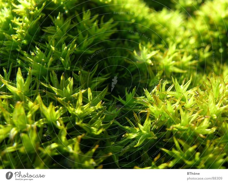 moosi Ground cover plant Light and shadow Plant Green Colour Moss Beautiful weather sunny Star (Symbol) Shadow shadows light