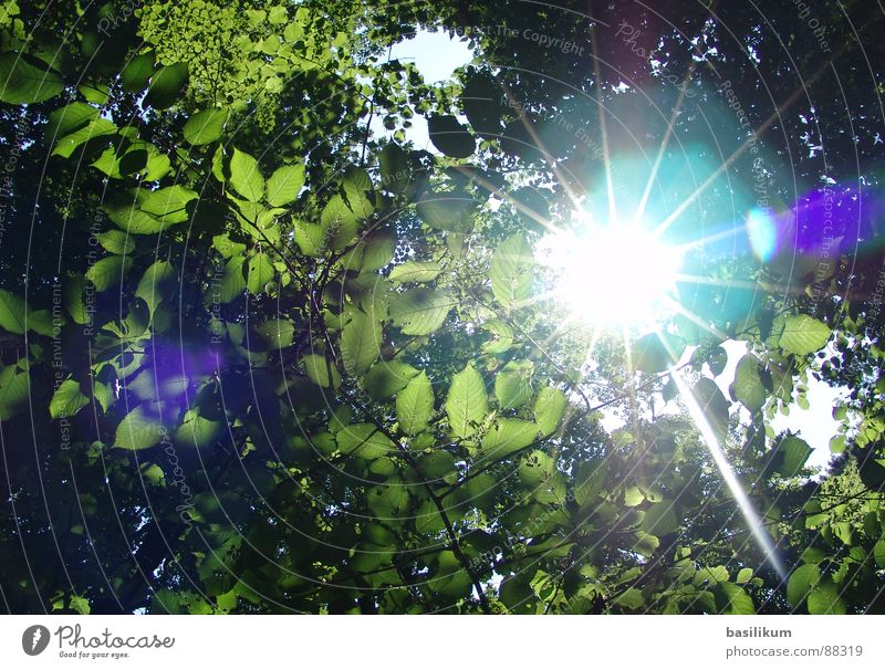sunstrals Forest Sunbeam Leaf Green Spring Summer Celestial bodies and the universe Lighting Bright Reflection Warmth