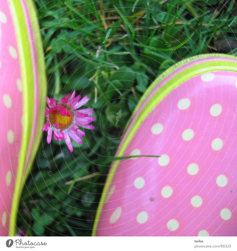 Rosa's Gumboots III Pink Rubber boots Footwear Boots Grass Flower Daisy Yellow Green Pattern Dappled Spring Jump Juicy Clothing wellies shoes Lawn flowers
