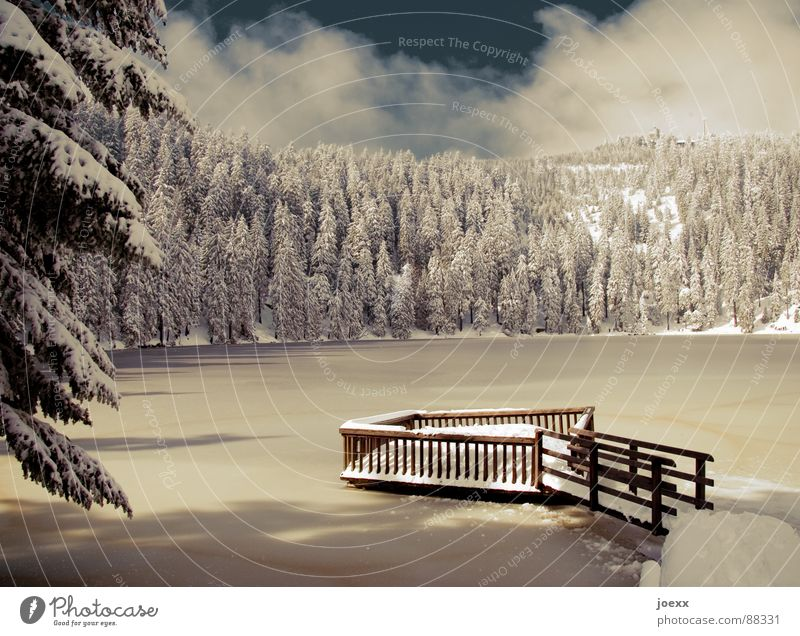 Sky Winter Vacation & Travel Calm Loneliness Forest Cold Snow Mountain Lake Ice Branch Idyll Fir tree Frozen Footbridge
