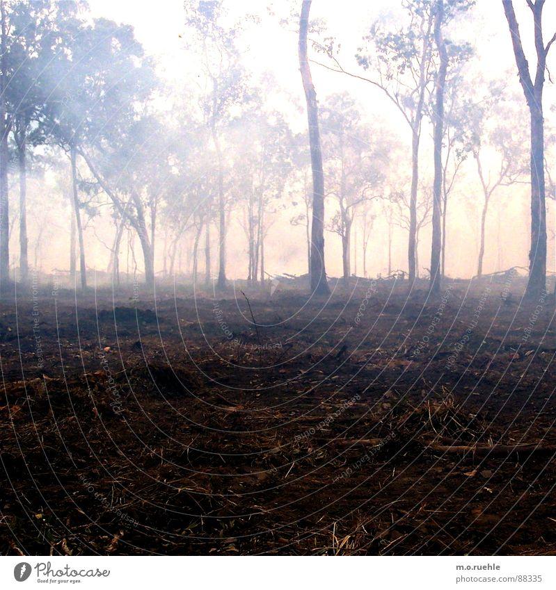 Nature Tree Forest Fog Smoke Mystic Woodground