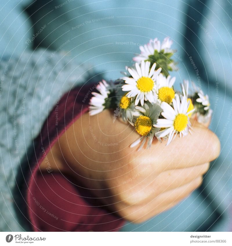 Child Hand Girl Beautiful Flower To hold on Bouquet Daisy Noble Pushing Mother's Day