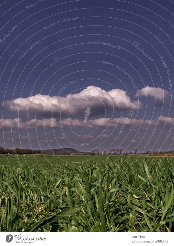 Fell down .... Field Spring Germinate Plant Clouds Carbon dioxide Worm's-eye view Horizon Weather isn't true at all all lies is only meant to sound funny