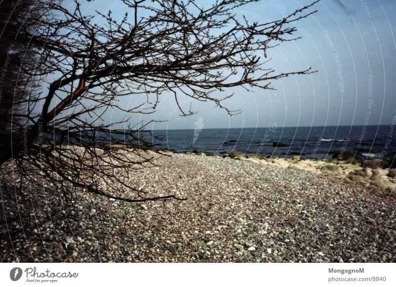 Water Tree Beach Stone