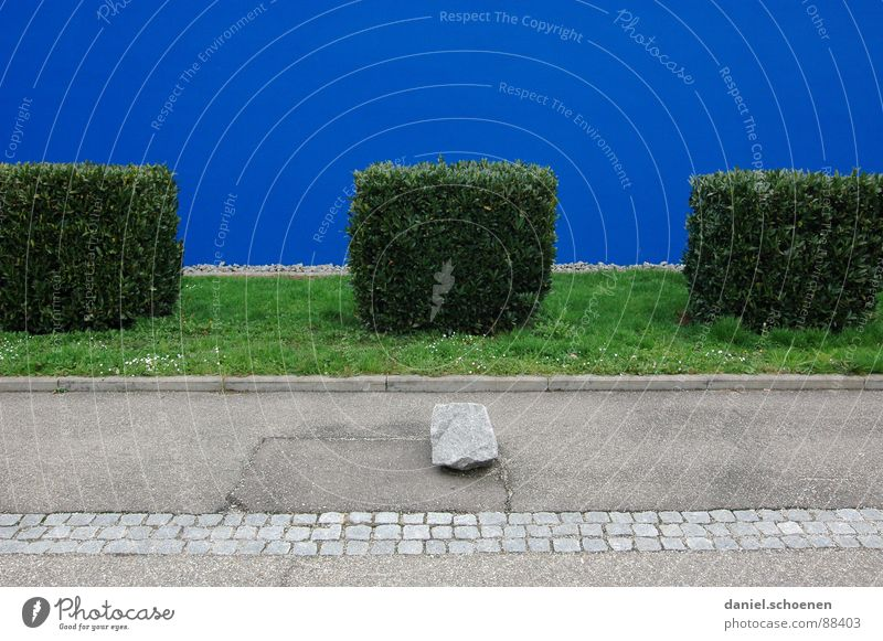 Order must be Cyan Blue Green Front garden Wall (building) Plaster Abstract Background picture Bushes Arrangement Tidy up Edge Square Trimmed Detail Garden Park