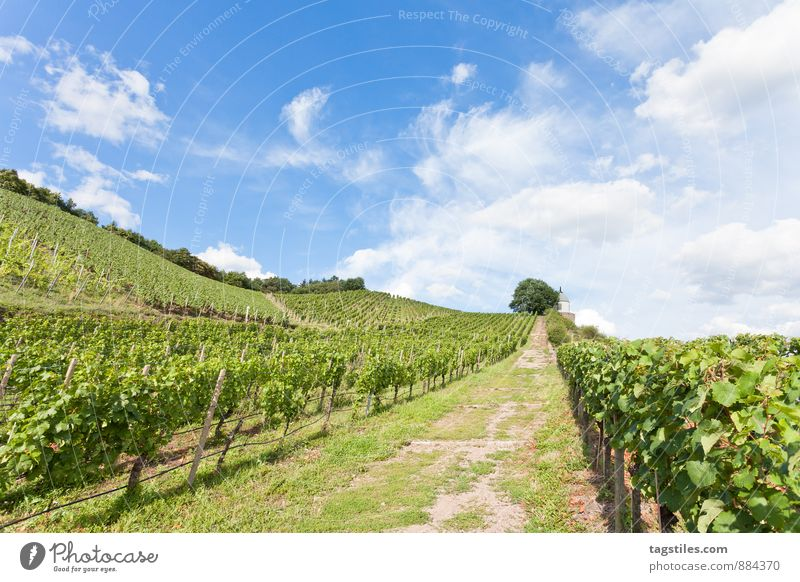 Sky Nature Vacation & Travel Heaven Blue Green Summer Sun Relaxation Travel photography Germany Tourism Idyll Card Vine Wine