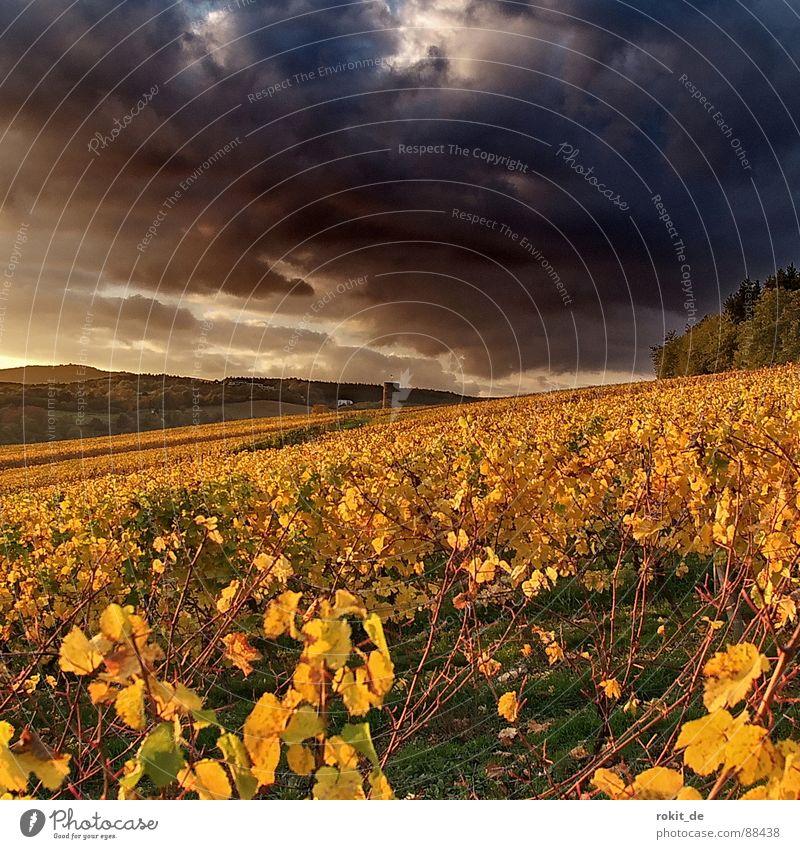 Sky Leaf Clouds Yellow Forest Dark Autumn Grass Mountain Fear Rhineland-Palatinate Gold Vine Threat Thunder and lightning Ruin