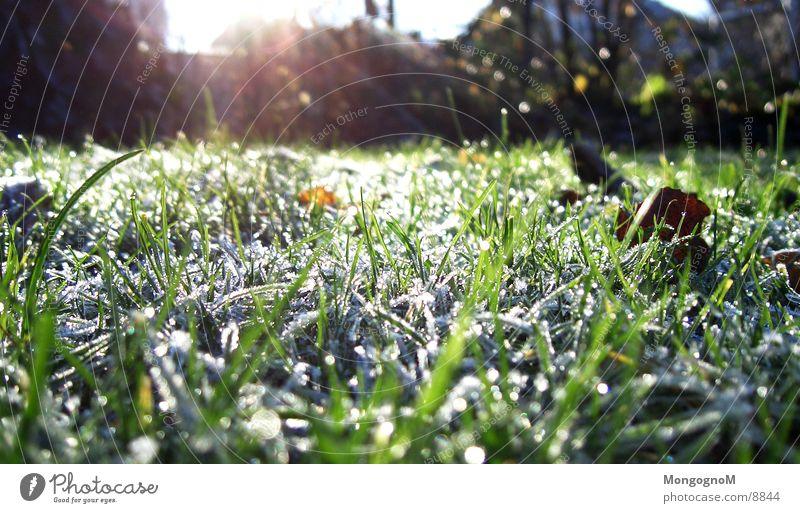 hoarfrost Grass Green Cold Winter Autumn Blade of grass Meadow penitent Frost Ice Lawn
