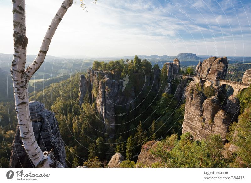 Nature Vacation & Travel Tree Relaxation Forest Mountain Travel photography Architecture Rock Germany Idyll Tourism Vantage point Bridge Card Tourist Attraction