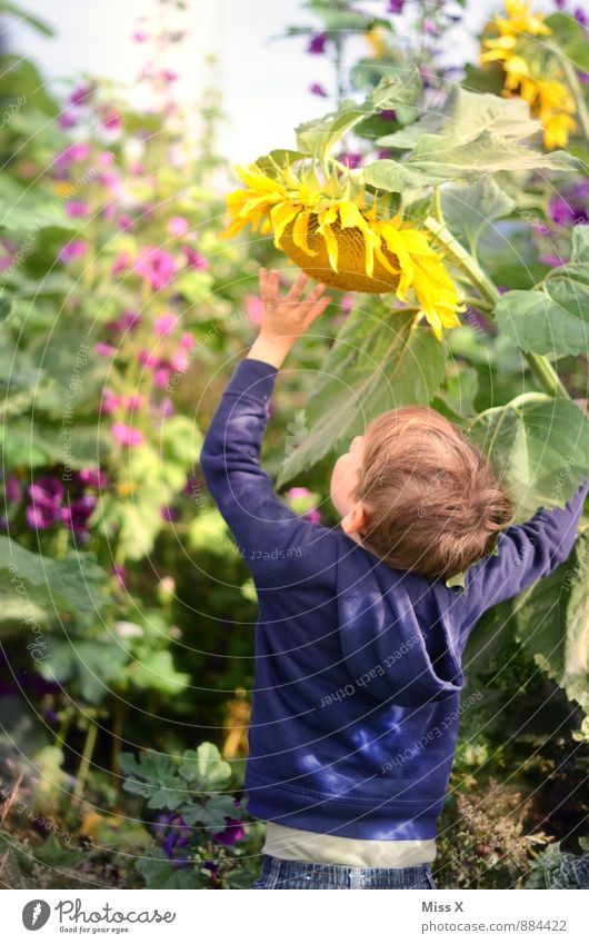 Human being Child Nature Summer Flower Yellow Meadow Autumn Blossom Boy (child) Playing Garden Leisure and hobbies Field Infancy Large