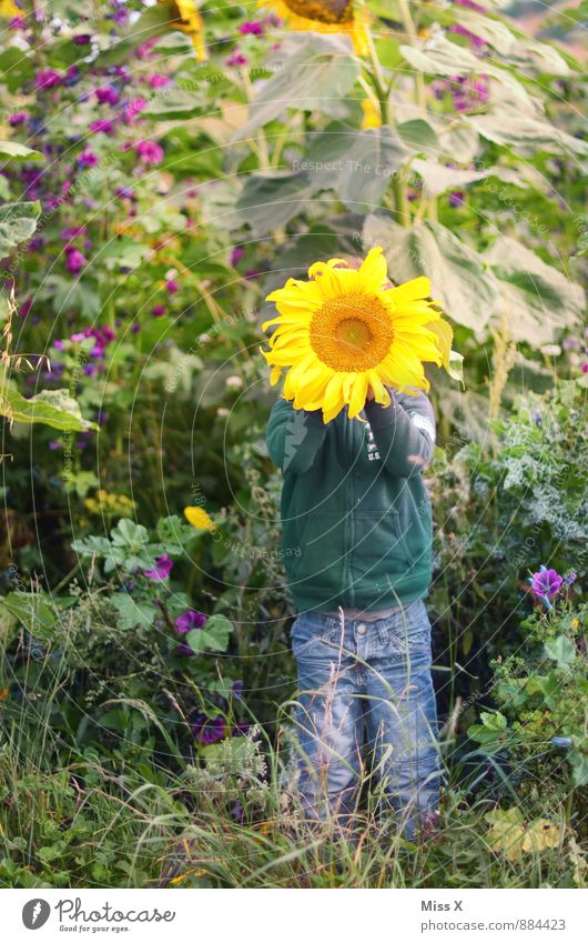 sunshine Leisure and hobbies Playing Garden Human being Child Toddler 1 1 - 3 years 3 - 8 years Infancy Nature Summer Autumn Flower Blossom Field Emotions Moody
