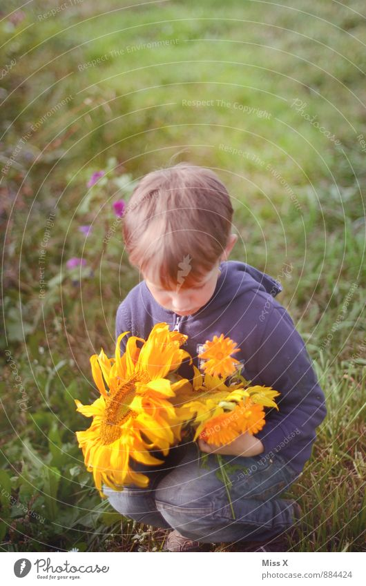 flower child Human being Child Toddler Boy (child) 1 3 - 8 years Infancy 8 - 13 years Summer Autumn Beautiful weather Flower Blossom Meadow Sit Sunflower
