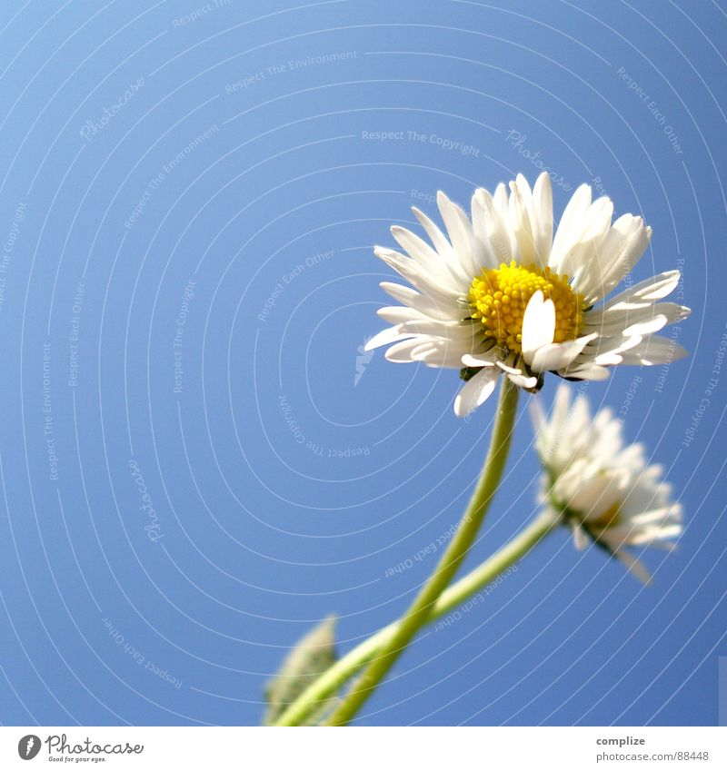 Nature Plant Blue Beautiful Summer White Flower Loneliness Yellow Love Spring Meadow Natural 2 Growth Wind