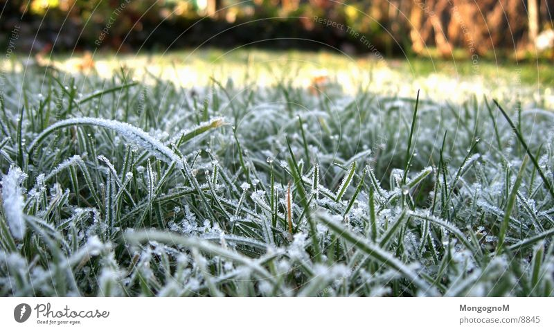 hoarfrost nr.2 Grass Green Cold Winter Autumn Blade of grass Meadow penitent Frost Ice Lawn