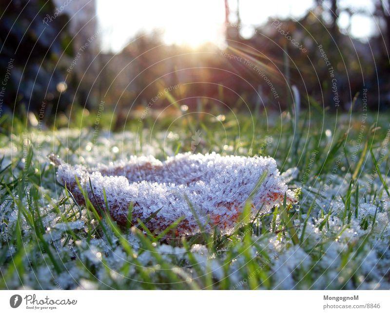 leaf Leaf Grass Hoar frost Meadow Sunbeam