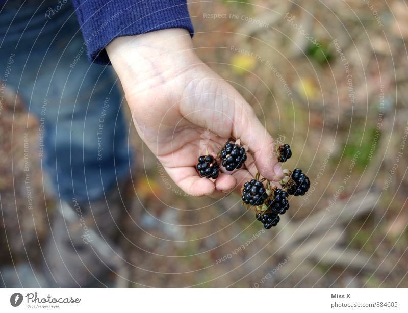 Plant Summer Hand Black Forest Healthy Eating Autumn Healthy Food Fruit Fresh Nutrition Sweet Delicious Harvest Pick