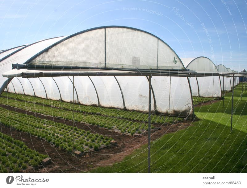 windup Colour photo Exterior shot Copy Space right Wide angle Gardening Agriculture Forestry Plant Agricultural crop Field Blue Green Market garden Gardener