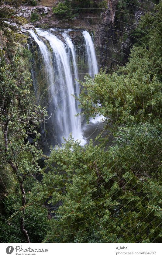 water if Environment Nature Plant Elements Water Drops of water Summer Tree Bushes Foliage plant Wild plant Virgin forest Rock Canyon Waterfall Wet Natural