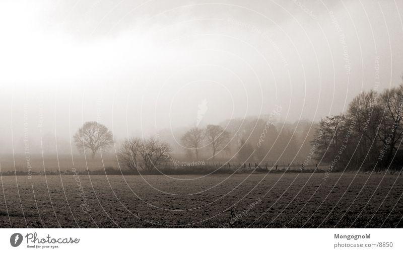 Field#2 Fog Tree Meadow Fence