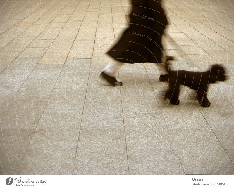 Dog Man City Black Street Gray Lanes & trails Stone Legs Going Walking Concrete Places To go for a walk Coat Mammal