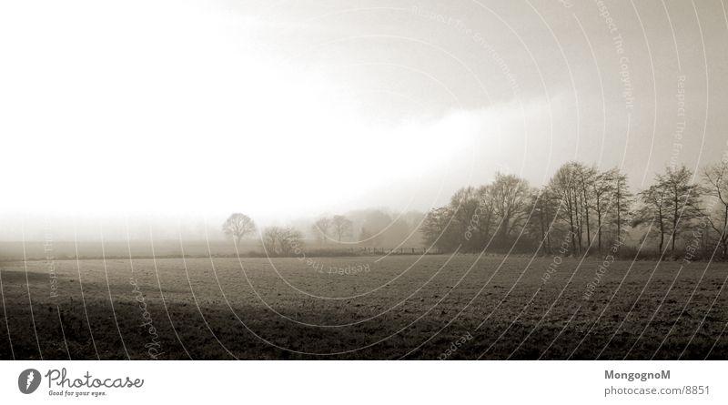 field Field Fog Tree Meadow Fence