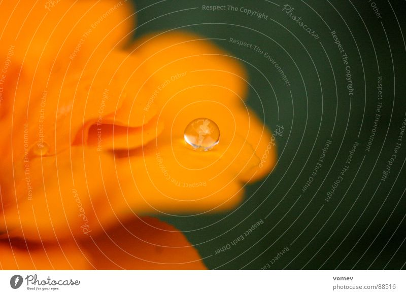 Water Flower Blossom Warmth Orange Drops of water Physics Fantastic