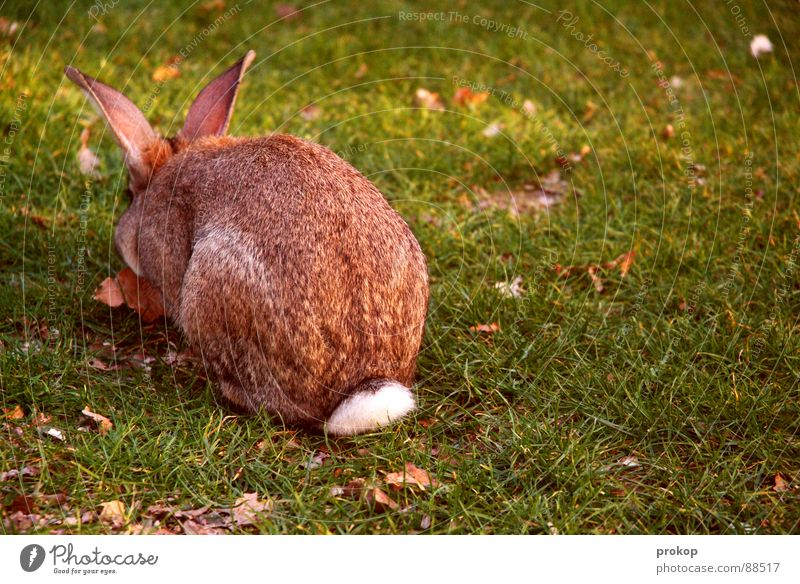 Nature Plant Animal Meadow Jump Wild animal Delicious Pelt Pet Mammal Egg To feed Hare & Rabbit & Bunny Public Holiday Rodent Demonstration