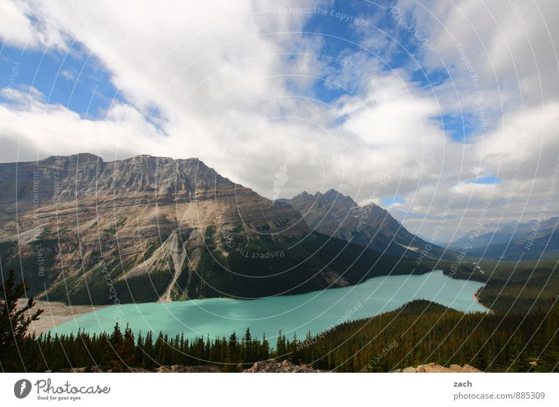 View of Peyto Lake Vacation & Travel Tourism Far-off places Nature Landscape Water Sky Clouds Sunlight Summer Beautiful weather Plant Tree Forest Rock Mountain