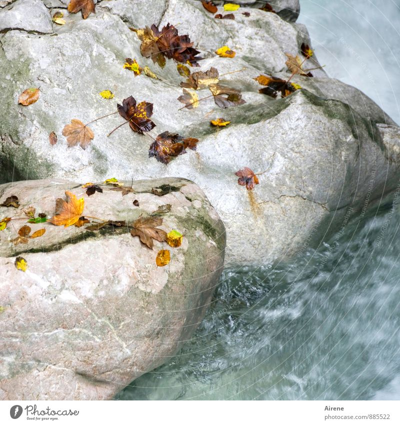 Dispersion plate II Nature Elements Water Autumn Leaf Autumn leaves Rock Alps Canyon Seisenberg Gorge Brook Mountain stream Stone Happiness Fresh Cold Speed