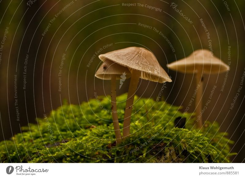 sheltered Environment Nature Plant Moss Mushroom Mushroom cap Gill fungi Lamella Forest Animal Tick 1 Brown Gray Green Colour photo Exterior shot Close-up