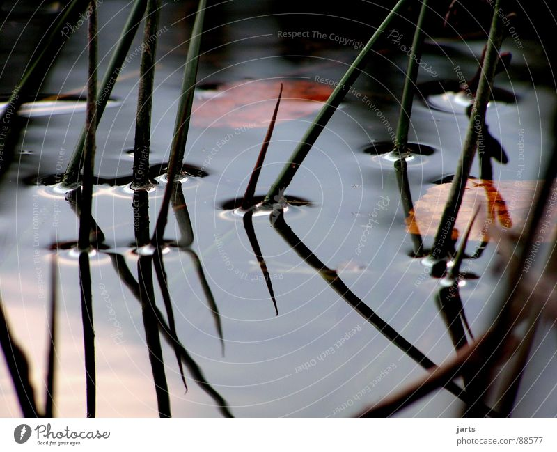 Still Water Lake Common Reed Calm Reflection Loneliness Dream Think Transience Relaxation ponder jarts