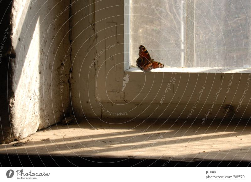 one moment Window Butterfly Light Captured Window board Animal Feeble Sporting event Competition Glass Shadow Penitentiary Frame Snapshot