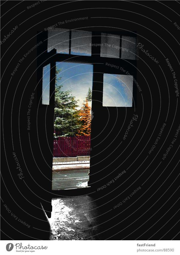 Sky Tree Blue Black Street Window Gray Glass Door Wet Hope Stairs Open Vantage point Gate Historic